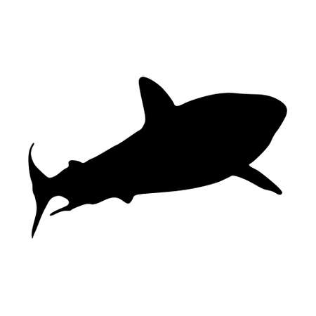 Grey Reef Shark (Carcharhinus Amblyrhynchos) Swimming Undersea On a Front View Silhouette Found In Map Of Indian And Pacific Oceans Vectores