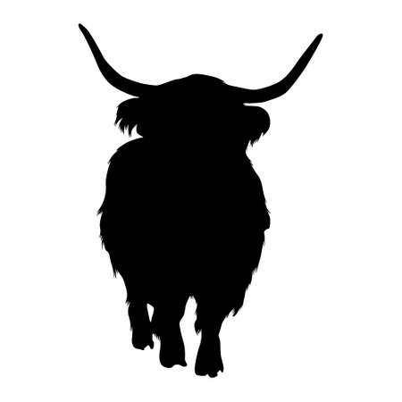 Standing Highland Cattle On a Front View Silhouette Found In Scottish Highlands