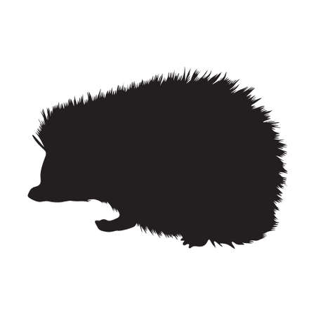 Walking Hedgehog (Atelerix Albiventris)Side View, Silhouette, Found In Map Asian,Europe And Africa