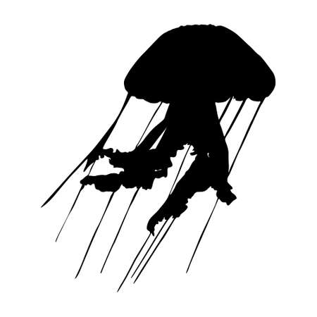 Swimming Jellyfish (Cnidaria Scyphozoa Aurelia) On a Front View Silhouette Found In Map Of All Around The World. Good To Use For Element Print Book, Animal Book and Animal Content
