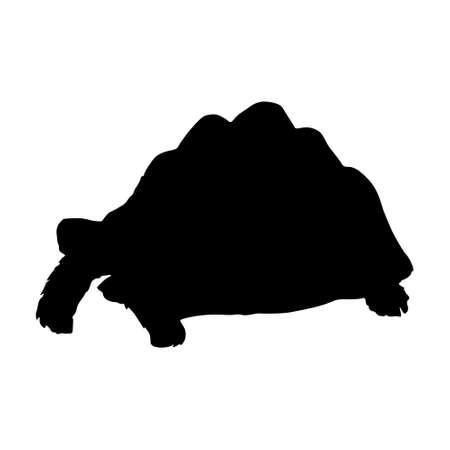 Standing Leopard Tortoise (Geochelone Pardalis) On a Side View Silhouette Found In Map Of Africa. Good To Use For Element Print Book, Animal Book and Animal Content 矢量图像
