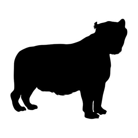 Standing Liger (Panthera tigris) On a Side View Silhouette Found In Map Of Africa, Asia, Eurasia And North America. Good To Use For Element Print Book, Animal Book and Animal Content