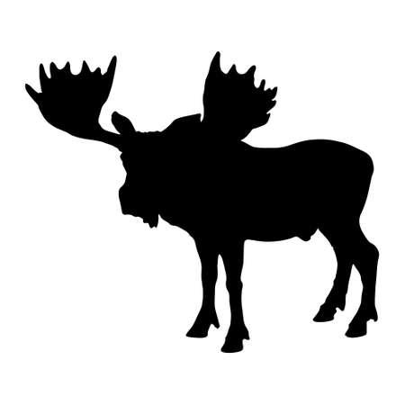 Standing Moose vector on white Illustration
