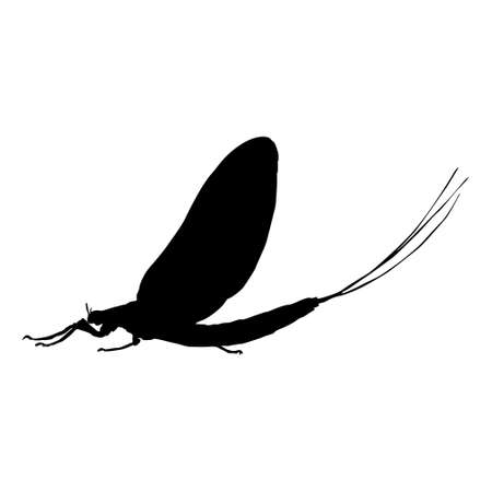 Flying Mayfly (Ephemeroptera) On a Side View Silhouette Found In Map Of All Around The World. Good To Use For Element Print Book, Animal Book Ilustração