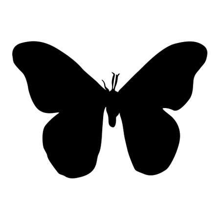 Flying Moth vector on white