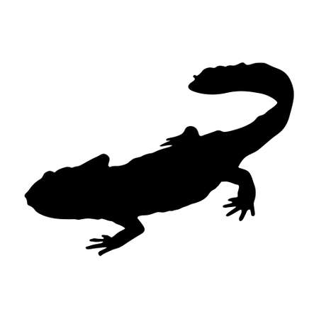 Newt (Lissotriton Vulgaris) Standing On a Side View Silhouette Found In Map Of Asia, Eurasia, Europe And North America.