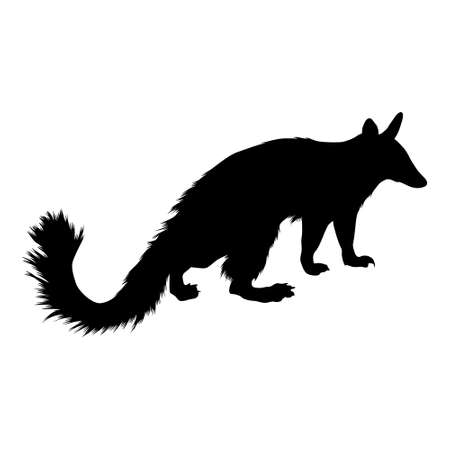 Numbat (Myrmecobius Fasciatus) Standing On a Side View Silhouette Found In Map Of Oceania.