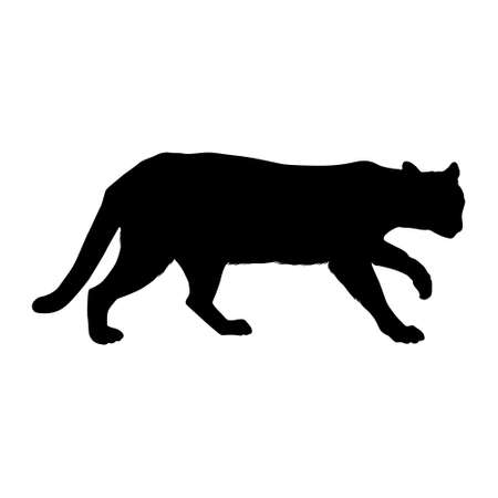 Ocelot (Leopardus pardalis) Walking On a Side View Silhouette Found In Map Of Central And South America. Good To Use For Element Print Book, Animal Book and Animal Content