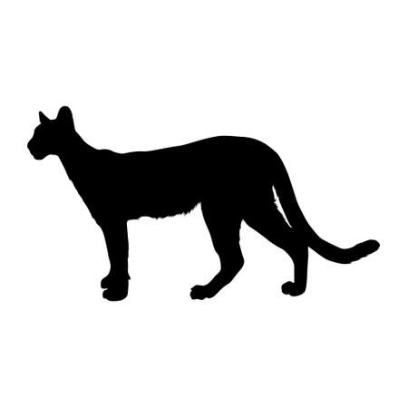 Panther (Panthera onca) Standing On a Side View Silhouette Found In Map Of America. Good To Use For Element Print Book, Animal Book and Animal Content
