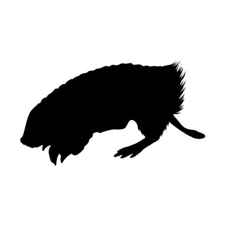 Pink Fairy Armadillo (Chlamyphorus truncatus) Standing On a Side View Silhouette Found In Map Of South America. Good To Use For Element Print Book, Animal Book and Animal Content 免版税图像 - 157606407