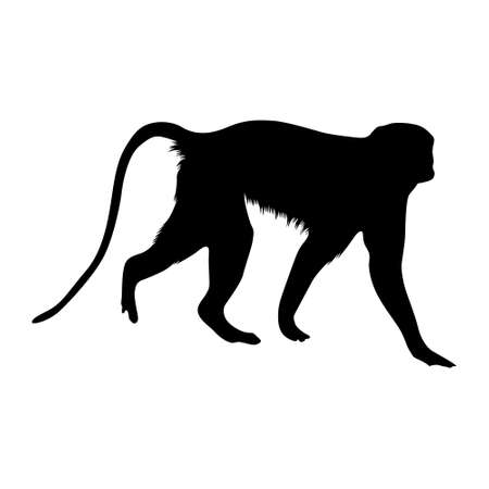 Patas Monkey (Erythrocebus patas) Walking On a Side View Silhouette Found In Map Of Africa. Good To Use For Element Print Book, Animal Book and Animal Content