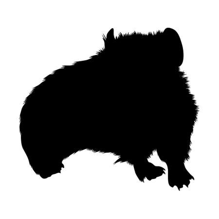 Pika (Ochotona Minor) Standing On a Front View Silhouette Found In Map Of Asia,Europe And North America. Good To Use For Element Print Book, Animal Book and Animal Content