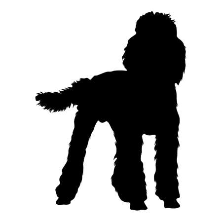 Poodle Dog (Canis Lupus) Standing On a Front View Silhouette Found In Map Of Europe. Good To Use For Element Print Book, Animal Book and Animal Content