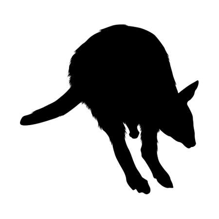 Pademelon (Thylogale) Jumping On a Front View Silhouette Found In Map Of Oceania. Good To Use For Element Print Book, Animal Book and Animal Content Vectores
