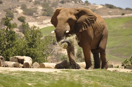 Elephant Imagens