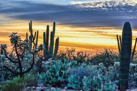 southwestern: Southwestern Sunset