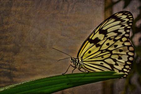 piheno: Pillangó pihen egy levél Stock fotó