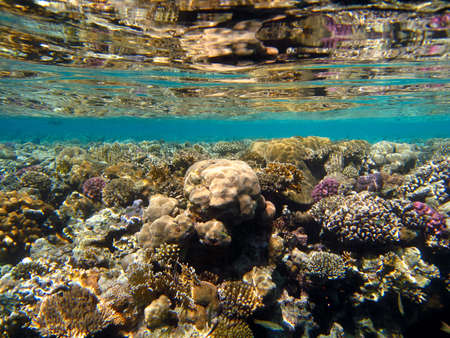 pristine corals: Below the surface with the reflection of a coral reef Stock Photo