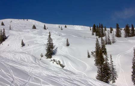 deep powder snow: Ski tracks through deep powder snow ib between trees