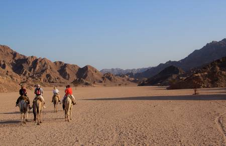 A group of unidentifiable tourists riding on camels in the desert