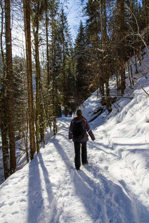 wintersport: Hiking girl from behind on a winter path through a forest on a sunny day