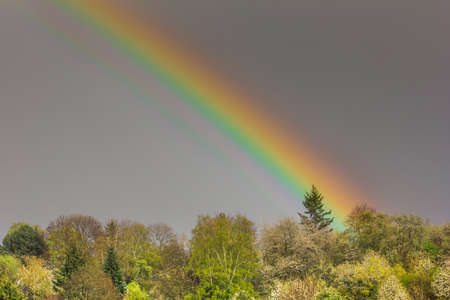 end of rainbow: End of the Rainbow touches a pine tree on a grey spring day, landscape