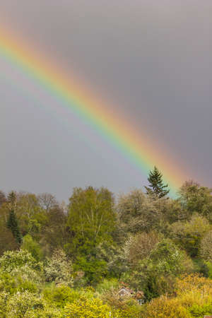 end of rainbow: End of the Rainbow touches a pine tree on a grey spring day, portrait