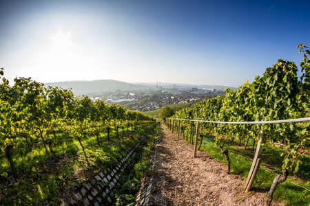 View down a vineyard with the City of Stuttgart in the background photo