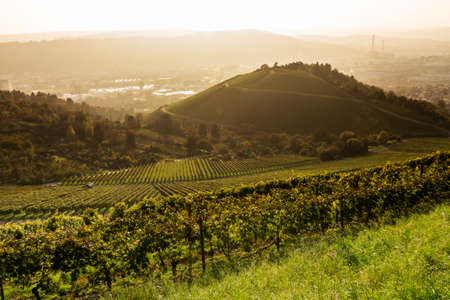 contradictory: View down a vineyard with the City of Stuttgart in the background