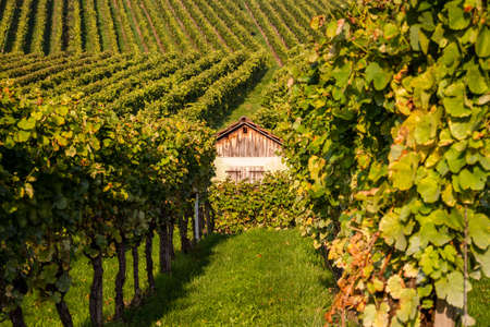 The gable of a cabin inside a vineyard