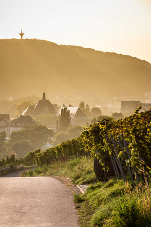 Atmospheric path along a vineyard, leading to a little town in the haze
