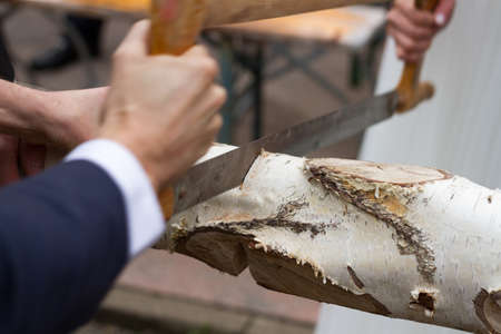 Closeup of a birch tree log being sawn by someone dressed in a suit and dress shirt with a hacksaw