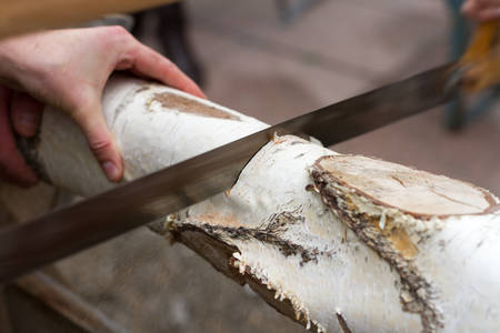 Closeup of a birch tree log being sawn with a hacksaw. A hand is holding the log.