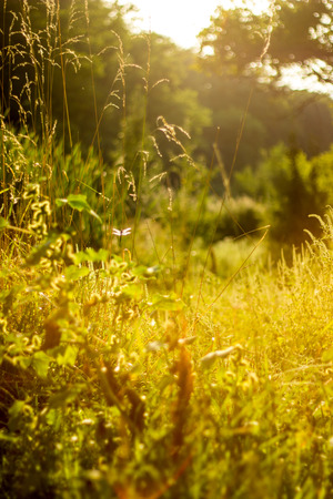Sunny summer forest view. Vibrant landspace photo of green woods and grass. Standard-Bild - 110021788