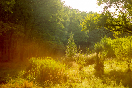 Sunny summer forest view. Vibrant landspace photo of green woods and grass. Standard-Bild - 110021790