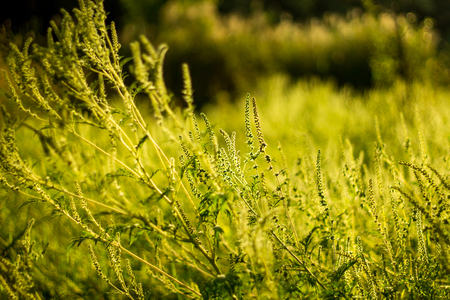Vibrant meadow grass close up on sunset. Bright local landscape image. Standard-Bild - 110021793