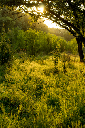 Sunny summer forest view. Vibrant landspace photo of green woods and grass. Standard-Bild - 110021794