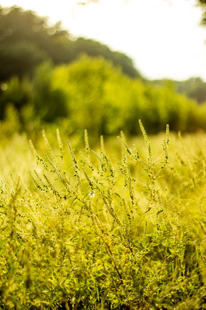 Vibrant meadow grass close up on sunset. Bright local landscape image. Standard-Bild - 110021796