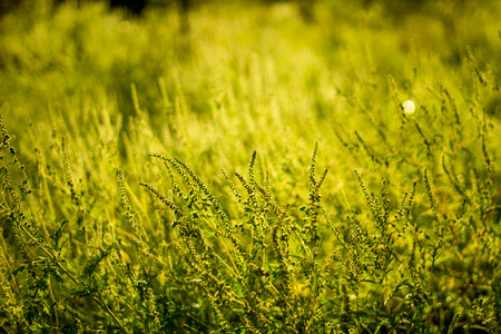 Vibrant meadow grass close up on sunset. Bright local landscape image. Standard-Bild - 109978403