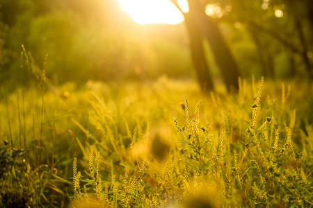 Vibrant meadow grass close up on sunset. Bright local landscape image. Standard-Bild - 109978404