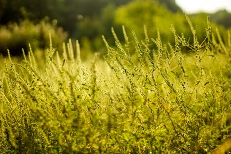 Vibrant meadow grass close up on sunset. Bright local landscape image. Standard-Bild - 109978407