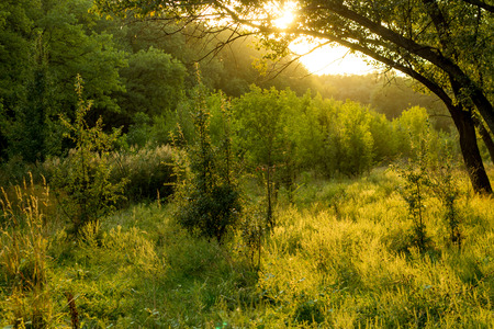 Sunny summer forest view. Vibrant landspace photo of green woods and grass. Standard-Bild - 109978408