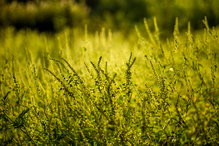 Vibrant meadow grass close up on sunset. Bright local landscape image. Standard-Bild - 109978409