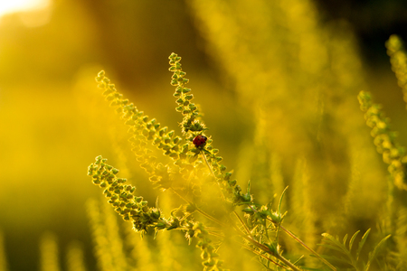 Vibrant meadow grass close up on sunset. Bright local landscape image. Standard-Bild - 109978412
