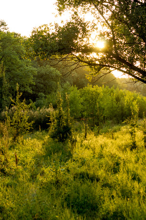 Sunny summer forest view. Vibrant landspace photo of green woods and grass. Standard-Bild - 109978414