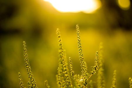 Vibrant meadow grass close up on sunset. Bright local landscape image. Standard-Bild - 109978416