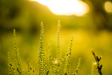 Vibrant meadow grass close up on sunset. Bright local landscape image. Standard-Bild - 109978421