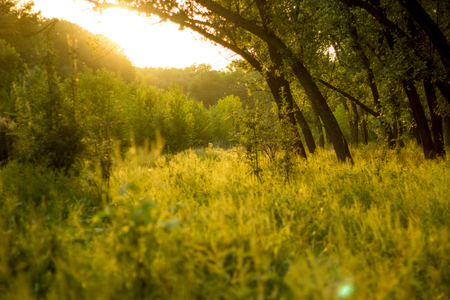 Sunny summer forest view. Vibrant landspace photo of green woods and grass. Standard-Bild - 109978443