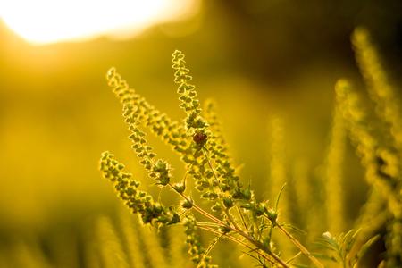 Vibrant meadow grass close up on sunset. Bright local landscape image. Standard-Bild - 109978453