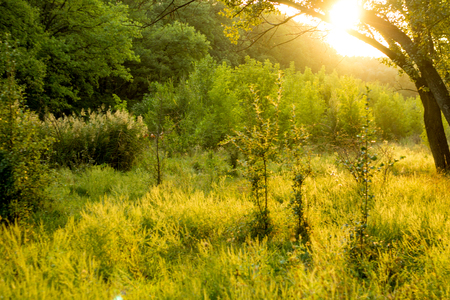 Sunny summer forest view. Vibrant landspace photo of green woods and grass. Standard-Bild - 109978454